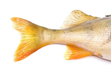 on perch: Fish tail,perch Stock Photo