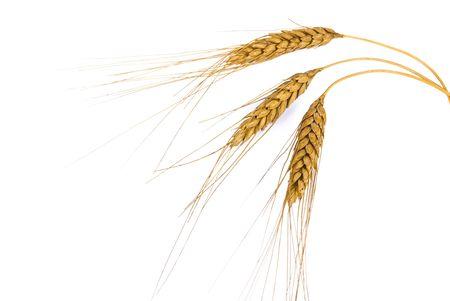 Wheat ears  Stock Photo - 6525577