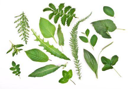 Herbarium Stock Photo - 7163667