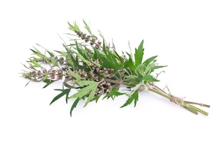 Herbal medicine: Motherwort