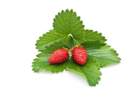 Fresh strawberry fruits with green leaves  photo