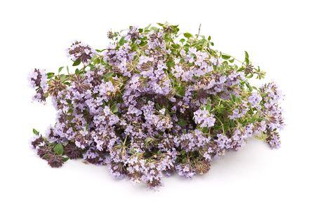 Herbal medicine : thym (Thymus serpillum)