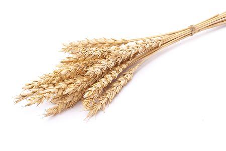 Wheat ears Stock Photo - 7722719