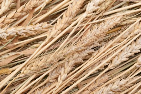 Wheat ears Stock Photo - 7848026