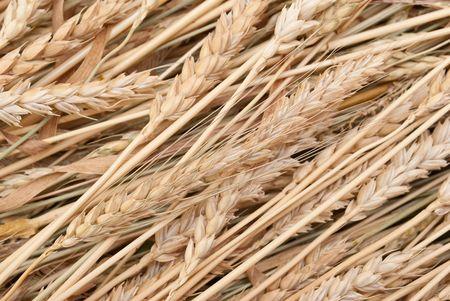Wheat ears Stock Photo - 7848026