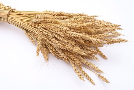 the spike: Wheat ears