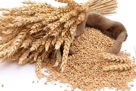 cosecha de trigo: La bolsa dispersa con trigo de grano  Foto de archivo