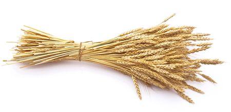 rye: Wheat ears