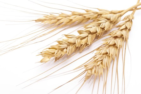 Wheat ears  Stock Photo - 8157042