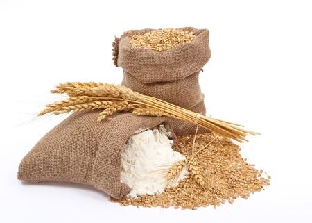 sack of flour: Flour and wheat grain