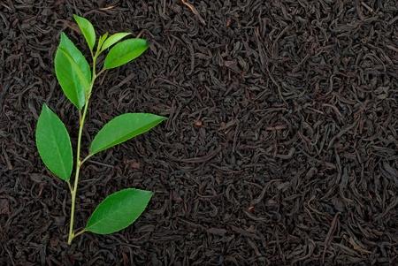 pekoe: Black tea with leafs