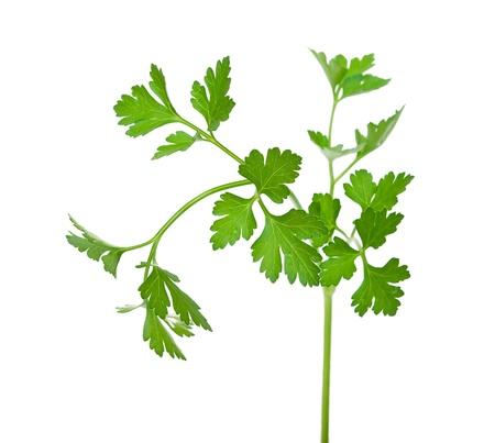 Fresh parsley  Stock Photo - 10413940