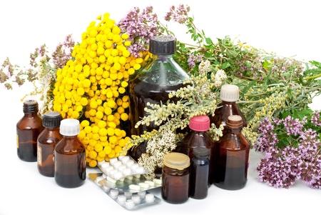 sanguisorba: Herbal medicine  Stock Photo