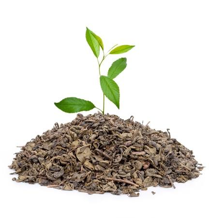 tannin: Green tea with leafs