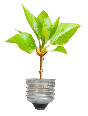 go inside: Green tree growing out of a bulb