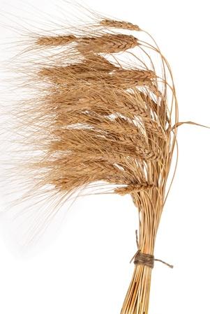 Sheaf of wheat photo