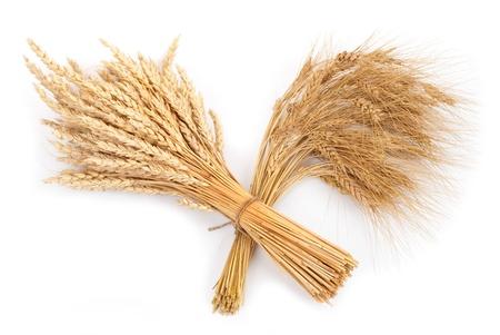Sheaf of wheat and rye photo