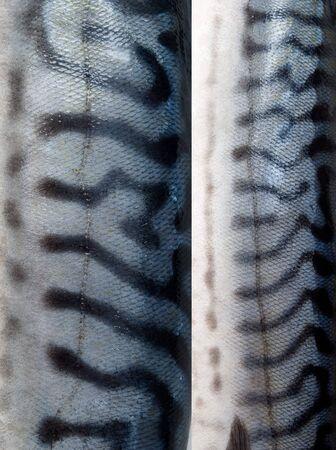 Texture of mackerel Stock Photo - 15058307