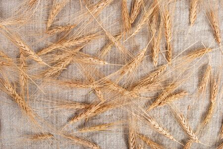 Wheat ears on burlap background  photo