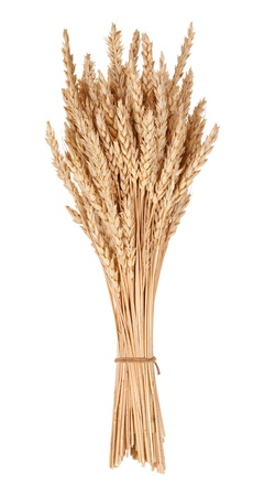 cultivo de trigo: Gavilla de trigo Foto de archivo