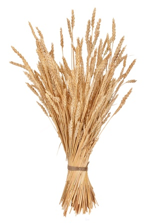 Sheaf of wheat photo