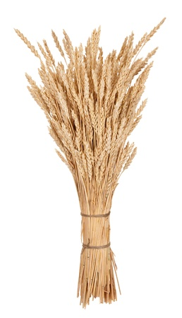 corn kernel: Sheaf of wheat