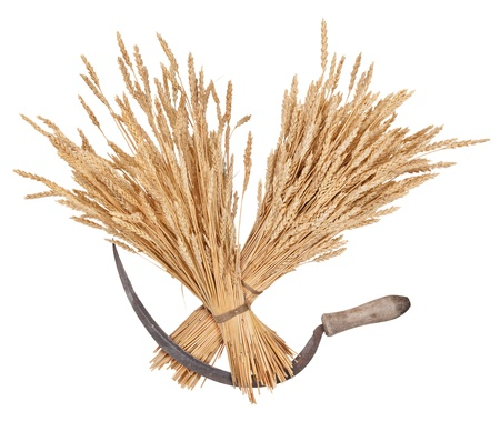 Sheaves of wheat and sickle photo