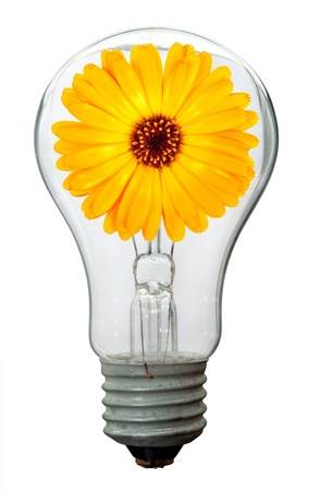 Calendula flower in lamp