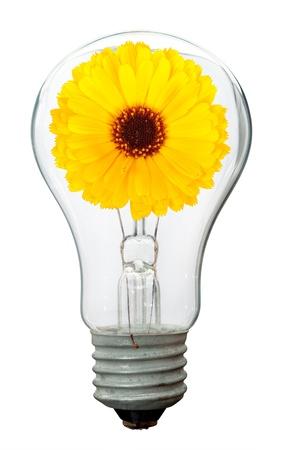 overuse: Calendula flower in lamp
