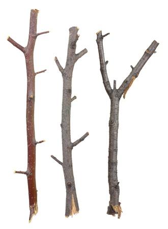 支店: 乾燥した枝