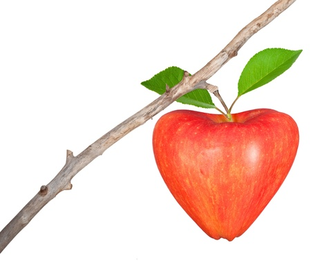 Heart symbol apple on dry branch photo
