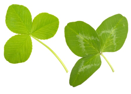Leaf Clover photo