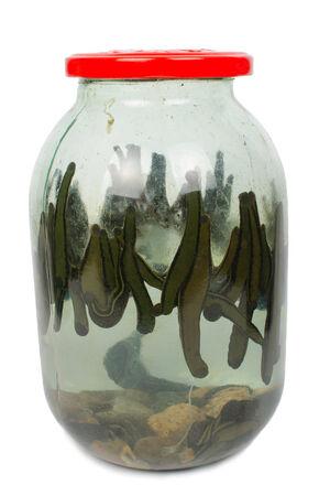 sanguijuela: Sanguijuela en un tarro de cristal Foto de archivo