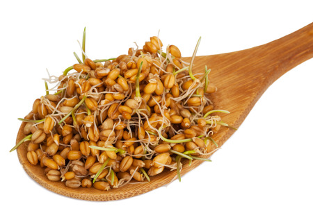 Wheat germ in a wooden spoon photo