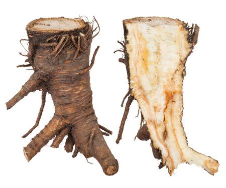 Medicinal plant: Angelica root Stok Fotoğraf