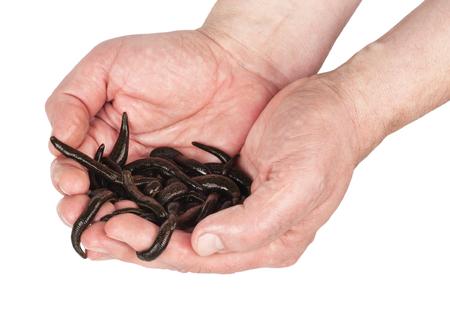 Hermaphrodite: Leeches in  hands