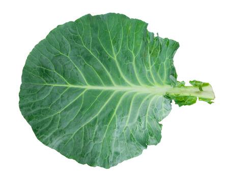 repollo: hoja de col verde fresca Foto de archivo