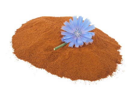 chicory flower: Blue chicory flower and powder of instant chicory