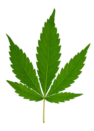 drug dealers: Cannabis leaf