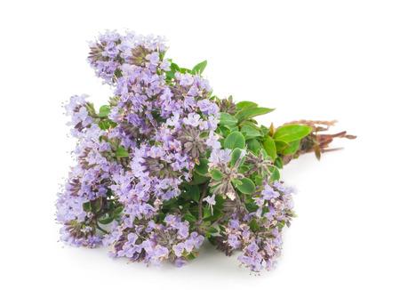 medicinal: Medicinal plant: Thyme