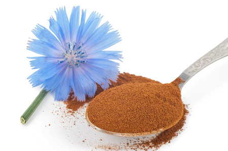 chicory coffee: Blue chicory flower and powder of instant chicory