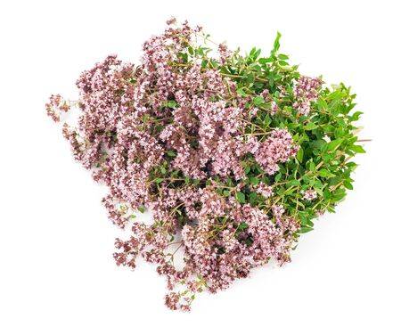 medicinal plant: Medicinal plant: Origanum vulgare Stock Photo