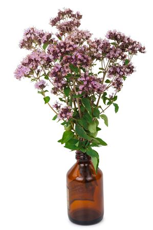 pharmaceutical bottle: Oregano flowers with pharmaceutical bottle