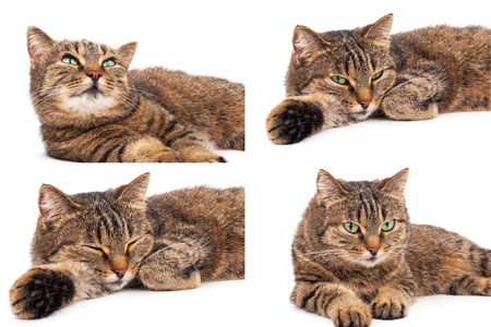 somnolence: Domestic cat Stock Photo