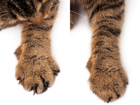 Cat paw Stock Photo
