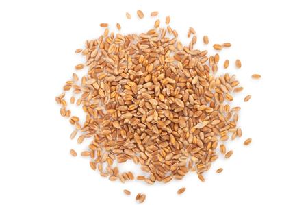 wheat grain: wheat grain