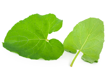 burdock: Burdock leaves