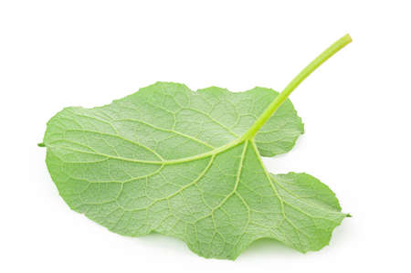 burdock: Leaf of burdock