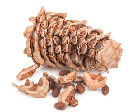 cedro: Cedar cono