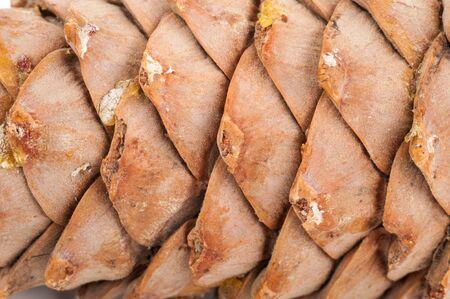 cedro: Cono del cedro textura